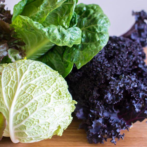 romain lettuce red leaf kale